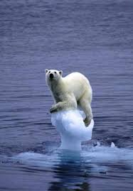 """Résultat de recherche d'images pour """"réchauffement climatiquee"""""""