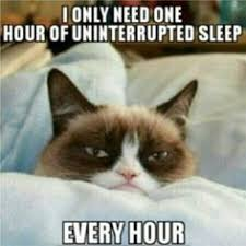 Grumpy Cat on Pinterest | Meme, Sleep Meme and Grumpy Kitty via Relatably.com