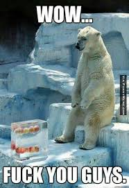 Animal memes - Poor polar bear | FunnyMeme.com via Relatably.com