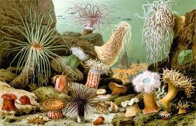 Sea anemone - Wikipedia