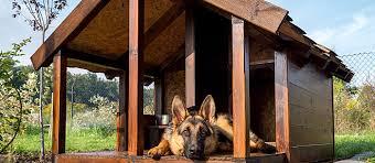 DIY Dog House Options for Any Skill Level   Care com Community