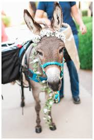 best images about events s donkeys and 17 best images about events s donkeys and cocktails