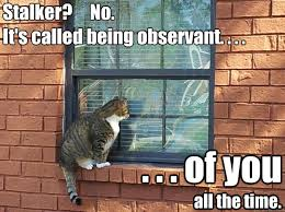 Stalker? No. It's called being observant. . . . . . . of you all ... via Relatably.com