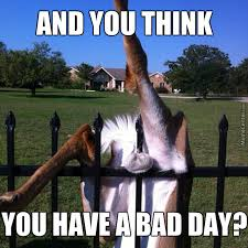 And You Think, You Have A Bad Day? by lady_gaga - Meme Center via Relatably.com