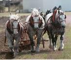 plow horse