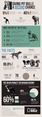 the truth about pit bulls nat geo tv the truth about pit bulls