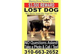 california couple postpones wedding to missing dog trendee king facebook