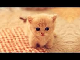 Cuteness kittens and <b>puppy</b> - <b>Cute cat</b> and <b>dogs</b> compilation ...