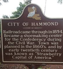 food history cooking by the book page  hammond is the largest city in tangipahoa parish and the hub of louisiana s premier strawberry growing region that includes the towns of amite independence