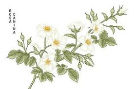 <b>Vintage Flower</b> Vector Art, Icons, and Graphics for Free Download