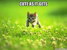 KaTz Incredible <3 on Pinterest | Cat Quotes, Cats and Funny Cat ... via Relatably.com