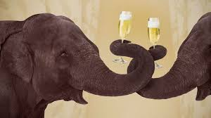 Do <b>animals</b> like drugs and alcohol? - BBC Future
