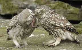 「貓頭鷹與蠕蟲」的圖片搜尋結果