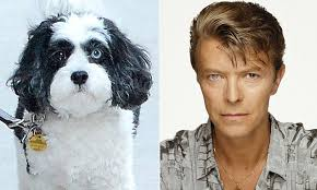 Image result for David Bowie's dog