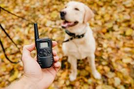 The 50 Best <b>Dog Training</b> (Shock) <b>Collars for</b> 2020 - Pet Life Today
