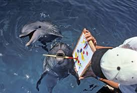 marine biologist career profile how to get a job marine animals