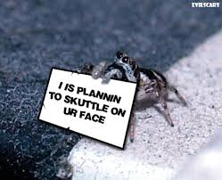 Image result for cute spider face