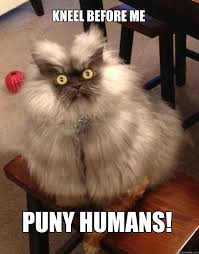 kneel before me puny humans! - Colonel Meow - quickmeme via Relatably.com