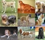 Images & Illustrations of dog
