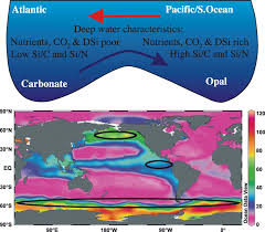 Opal sedimentation shifts in the World Ocean over the last 15 Myr