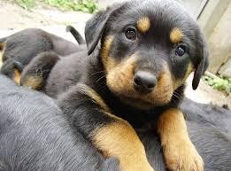 Ποιοι άλλοι έξυπνοι  σκύλοι περιέχονται στη πρώτη δεκάδα;...