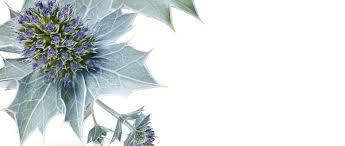 <b>Солнцезащитное Масло для Тела</b> SPF15 - Yves Rocher