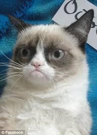 The original Grumpy Cat! Meet the pre-Internet pets who deserve a ... via Relatably.com