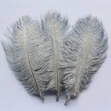 <b>pheasant</b> tail <b>feathers</b> UK