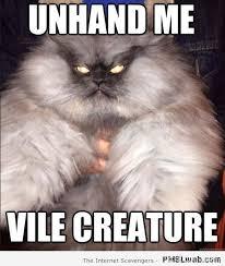 11-evil-cat-meme | PMSLweb via Relatably.com