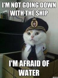 Pandabearer on Pinterest   Funny Cat Memes, Cat Memes and Pandas via Relatably.com