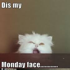 Monday Face on Pinterest | Lol, Funny Animal Pictures and Dump A Day via Relatably.com
