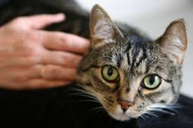 Top 10 Ways to Show Your <b>Cats</b> You <b>Love</b> Them