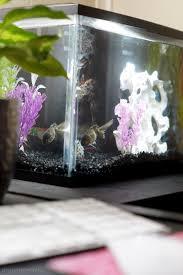 fish aquariums decor for home and office life aquarium office