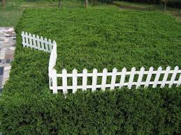 Small Picture The 25 best Plastic garden fencing ideas on Pinterest Chicken