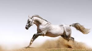 الخيول التركيه من اجمل خيول العالم وولاده حصان سبحان الله Images?q=tbn:ANd9GcQPl2c5inyLMR1R8zvQwTjKw0A4Xh1OendlOwnuulyd8vEEYBNxHg