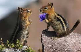 Image result for pictures of happy squirrels
