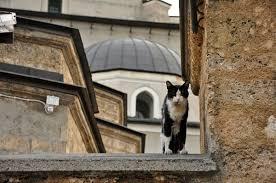 Islam and <b>cats</b> - Wikipedia