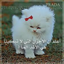 حيوانات حزينة تشعرك بلحزن images?q=tbn:ANd9GcQ