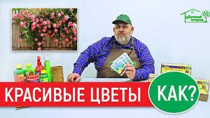 Отличный <b>стимулятор роста</b> растений и цветов. - YouTube