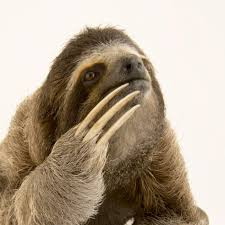 Three-Toed <b>Sloths</b> | National Geographic
