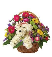 <b>Cute Dog</b> in Basket in Boston, MA | Central Square Florist