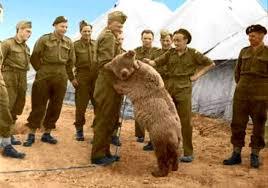 Znalezione obrazy dla zapytania niedźwiedź wojtek