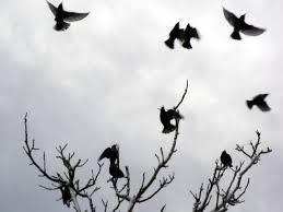 Αποτέλεσμα εικόνας για πουλι και δεντρο