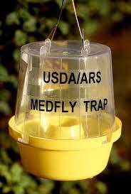 <b>Insect trap</b> - Wikipedia
