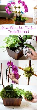 day orchid decor: transform a store bought orchid into a beautiful arrangement that would stun your florist