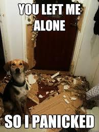 You left me alone So i panicked - Scumbag dog - quickmeme via Relatably.com