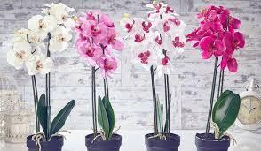 <b>Удобрение для орхидей</b> - самые эффективные и популярные ...