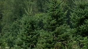 <b>Hot</b>, dry weather could have big impact on local <b>Christmas tree</b> ...