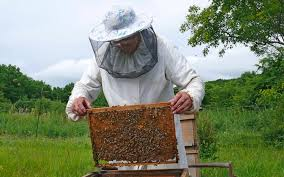 Image result for images of beekeepers