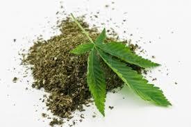 Consejos Para Cultivadores De Marihuana En Suelo